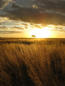 sunset-wheat-field-856983-mobileCropped